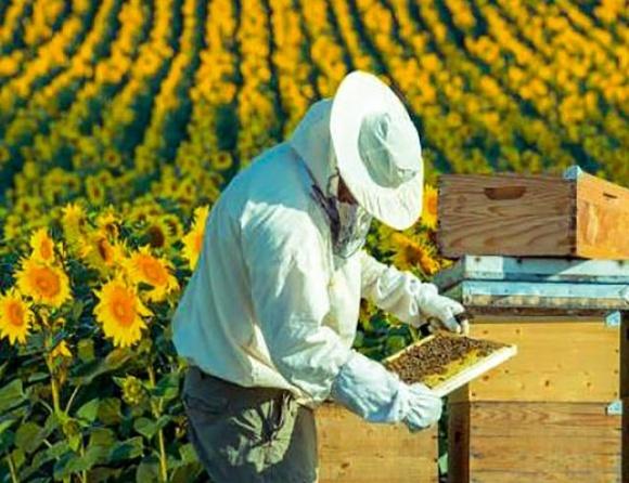 Рада предлагает не ужесточать уголовную ответственность за уничтожение пчел фото, иллюстрация