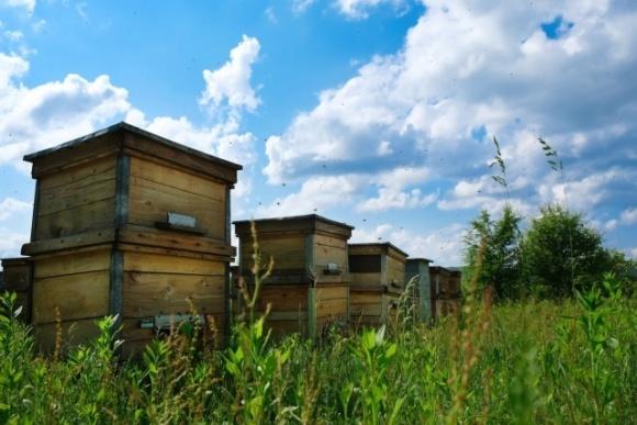 На Черниговщине остро стал вопрос отравления пчел пестицидами фото, иллюстрация
