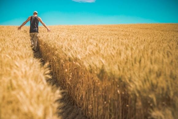 В Раде зарегистрировали постановление относительно обеспечения права работников с/х предприятий получения земельной доли фото, иллюстрация