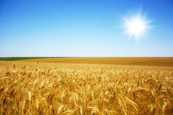 Советник Зеленского заявил о создании координационного совета по продовольственной безопасности  фото, иллюстрация