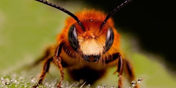 Агрохімічні компанії не згодні з висновками вчених про вплив інсектицидів на бджіл фото, ілюстрація