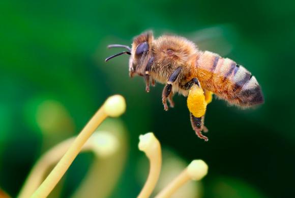 Ученые назвали причину вымирания пчел фото, иллюстрация