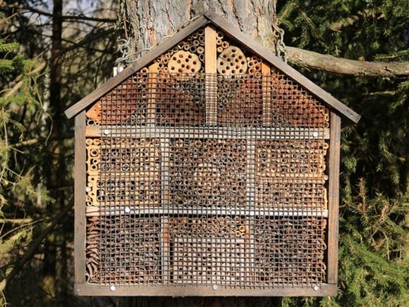 Агролайфхак: как построить пчелиный отель и повысить урожайность культур фото, иллюстрация