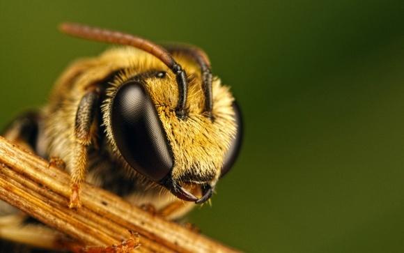 Французькі бджолярі закликають відмовитися від пестицидів фото, ілюстрація