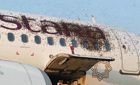 Рой диких пчел атаковал самолет в Индии фото, иллюстрация
