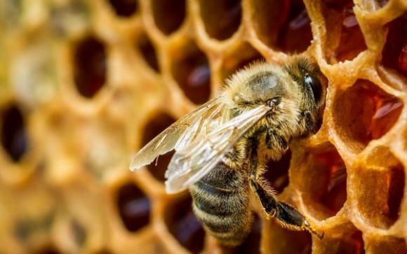 Украинским пчеловодам не нравится ценовая политика экспортеров фото, иллюстрация