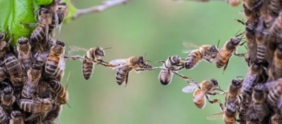 В Нидерландах провели четвертую национальную перепись пчел фото, иллюстрация