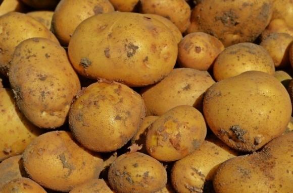 В Україну не пустили 20 тонн російської картоплі фото, ілюстрація