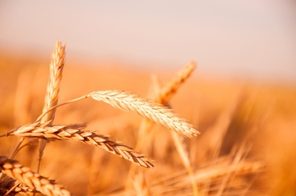 Украинский зерновой форум фото, иллюстрация