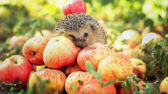 Україна наростила експорт яблук в 5,3 рази фото, ілюстрація