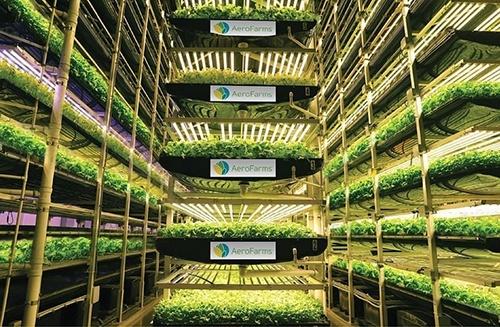 IKEA інвестувала в найбільшу в світі вертикальну ферму $100 млн фото, ілюстрація