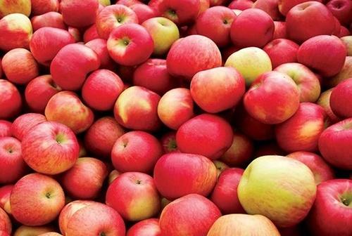 В травні Україна збільшила імпорт яблук в 7 разів фото, ілюстрація