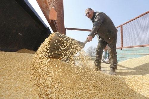 Кабмін обіцяє виділити аграріям в півтора рази більше грошей в 2020 році фото, ілюстрація