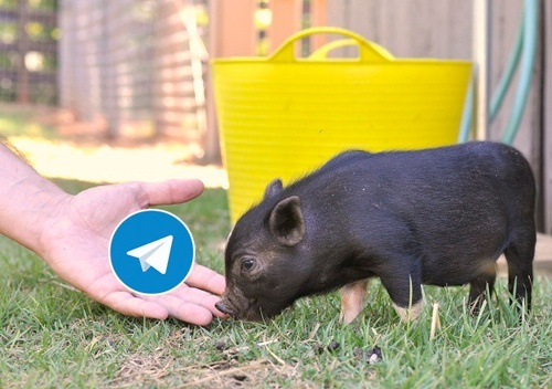 Друзі, журнал «Тваринництво та ветеринарія», проект нашого видавничого дому Univest Media, запустився у Telegram! фото, ілюстрація