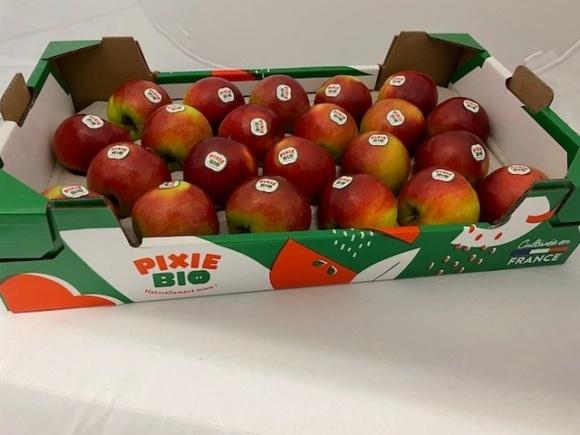Французские селекционеры вывели устойчивый к парше сорт яблок  фото, иллюстрация