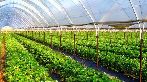 В Европе под пленкой выращивается 80% урожая, в Украине - всего 10% фото, иллюстрация
