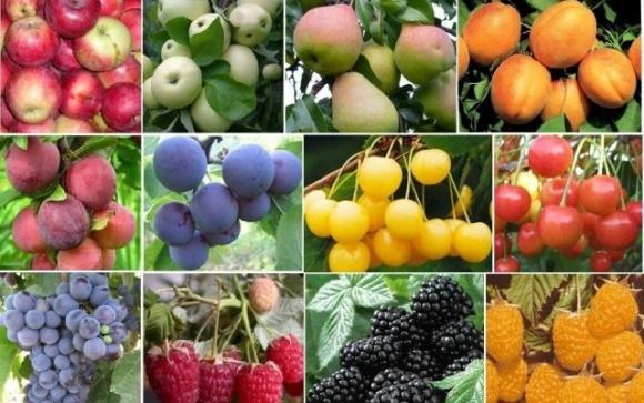 Выращивание плодово-ягодных культур на Львовщине становится более прибыльным фото, иллюстрация