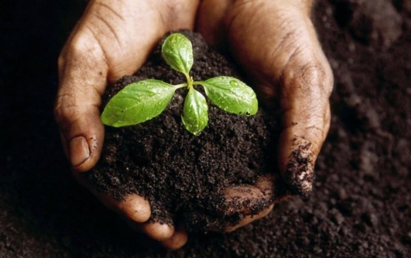 Bayer развивает инновационную технологию микробиомной диагностики почвы  фото, иллюстрация
