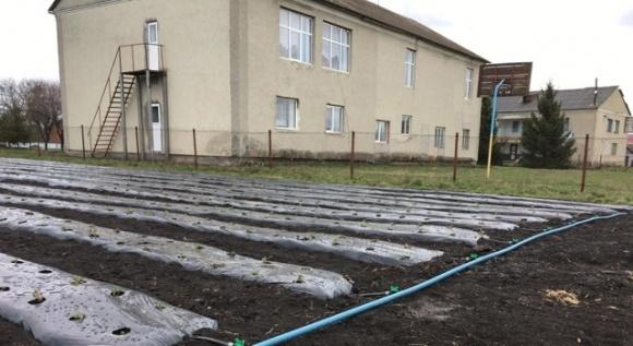 На Підгаєччині брати вирощують полуниці за європейськими стандартами фото, ілюстрація