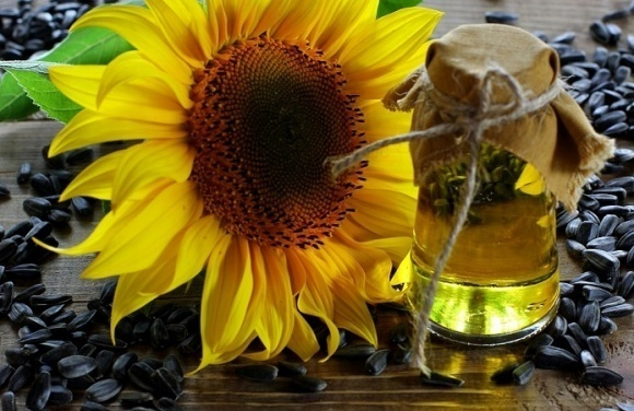 Украина нарастила экспорт рафинированного подсолнечного масла до рекордных значений фото, иллюстрация