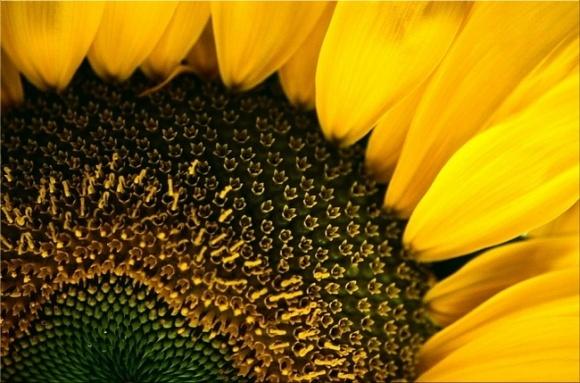 DuPont Pioneer достраивает на Полтавщине линию по производству семян подсолнечника фото, иллюстрация