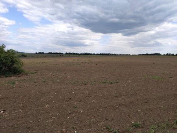 На Хмельнитчине земли природного парка засеяли соей и кукурузой  фото, иллюстрация