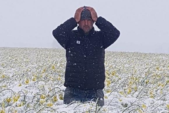 Сніг у Польщі: фермер показав плачевні наслідки травневого снігопаду  фото, ілюстрація