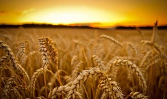 Японцы покупают контрольную долю в украинской агрокомпании  фото, иллюстрация