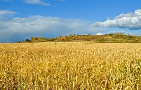 Найбільше української пшениці їде в Індонезію та Філіппіни фото, ілюстрація