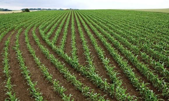 На Харьковщине ожидают рекордный урожай зерновых и зернобобовых фото, иллюстрация