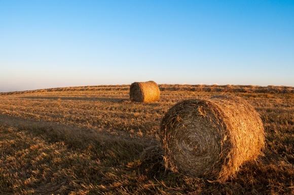 Теперь страховать сельхозпродукцию будут по-новому - Нацкомфинуслуг фото, иллюстрация