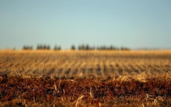 Орендна плата за землю принесла місцевим бюджетам 15 млрд грн фото, иллюстрация