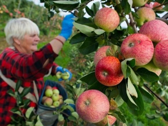 Польських селян змусять платити податки та соцвнески за сезонних працівників фото, ілюстрація