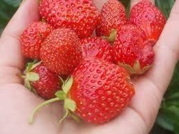 Українські ягоди продаватимуть у Китаї фото, ілюстрація
