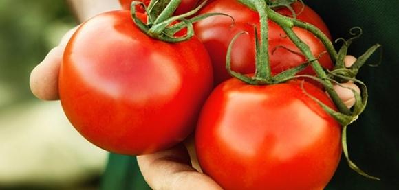Украина за 2017 г. экспортировала 21 тыс. т помидоров фото, иллюстрация
