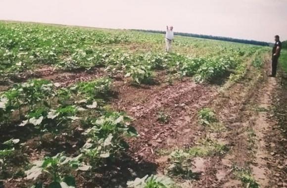 Сожжено почти 120 гектаров пшеницы, — фермер обвиняет фирму Порошенко в повреждении урожая фото, иллюстрация