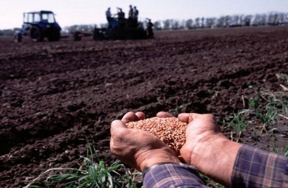 Наибольшая доля в структуре посевов будет принадлежать пшенице фото, иллюстрация