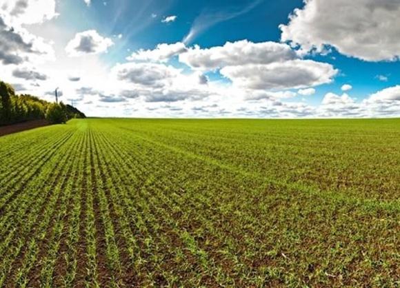 Урожайность пшеницы может снизиться на 15-20% фото, иллюстрация