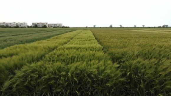 Інноваційні розробки вітчизняних учених для надійного захисту врожаю від згубної дії посухи фото, ілюстрація