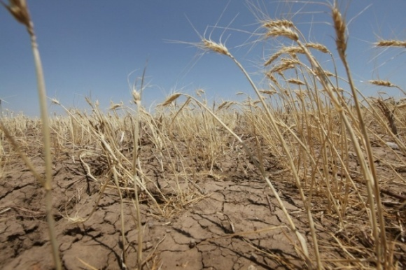 Скоро уборка урожая, а фермеры так и не получили компенсацию за потерю посевов фото, иллюстрация