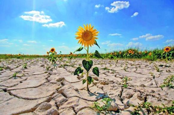Агролайфхак: як аграрії боряться з посухою на полях фото, ілюстрація
