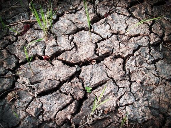 Три чверті посівів зернових на Запоріжжі у слабкому та зрідженому стані фото, ілюстрація