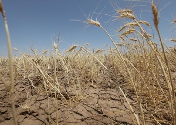 Последствия засухи. Украина не досчитается части урожая, — прогноз фото, иллюстрация