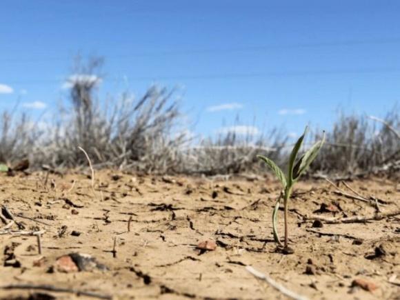 Україна може залишитися без урожаю: народний синоптик прогнозує небувалу посуху фото, ілюстрація