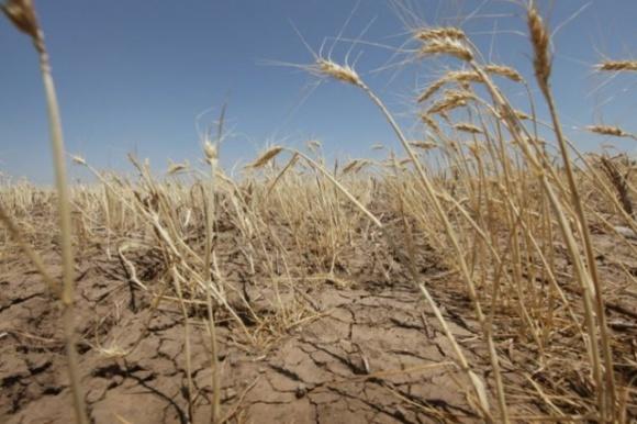 Україні загрожує посуха: фермери закликають державу про допомогу фото, ілюстрація