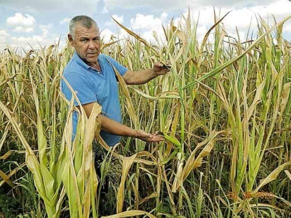 Засуха уничтожает урожай у фермеров в Винницкой области фото, иллюстрация