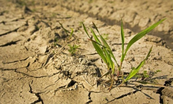 Аграрии Николаевщины могут остаться банкротами из-за масштабной засухи фото, иллюстрация