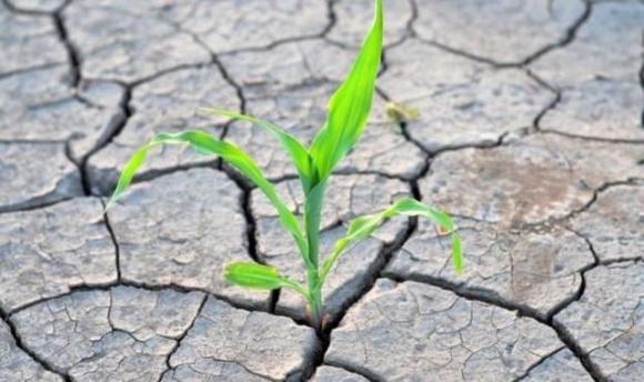 Аграрії, які постраждали від посухи, мають до 20 лютого 2021 року подати відповідні документи, щоб їм не нарахували ПДВ фото, ілюстрація