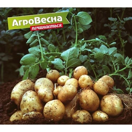 X Голландсько-український агробізнес форум з професійного картоплярства в рамках виставкової події «АгроВесна 2019» фото, ілюстрація
