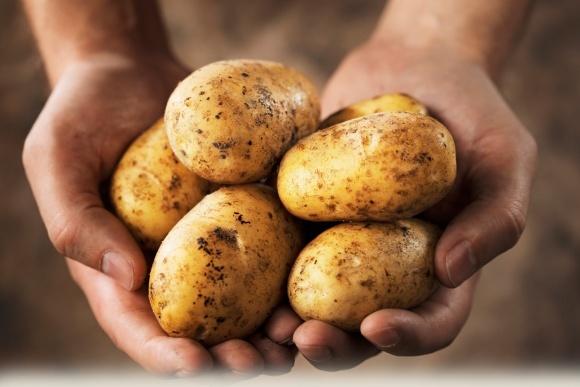 Картопля корисна для мозку - вчені фото, ілюстрація